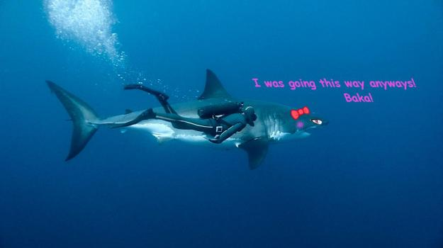 going this way shark